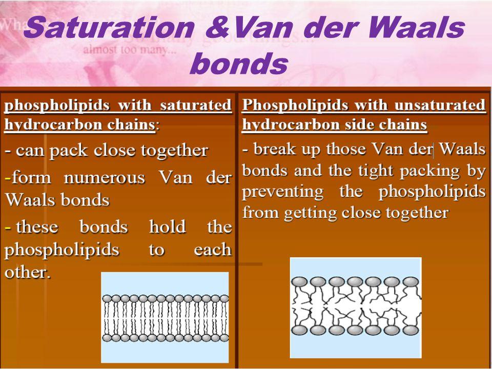 Saturation &Van der Waals bonds