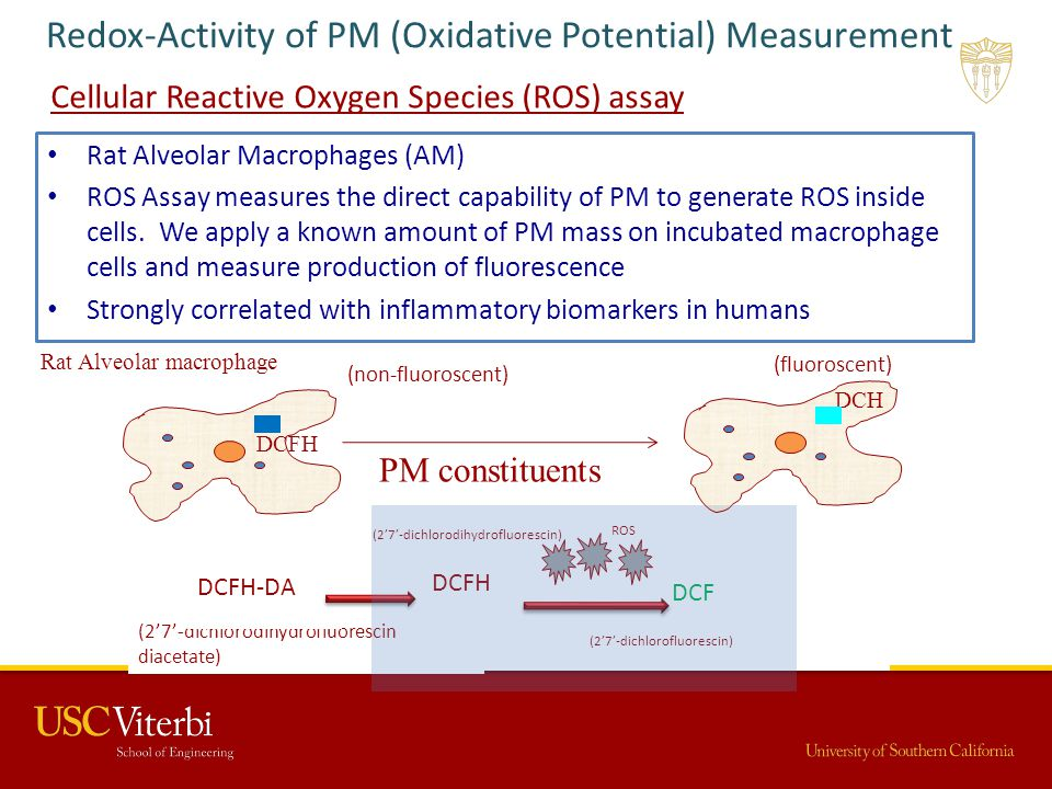 Redox-Activity of PM (Oxidative Potential) Measurement Cellular Reactive Oxygen Species (ROS) assay Rat Alveolar Macrophages (AM) ROS Assay measures t
