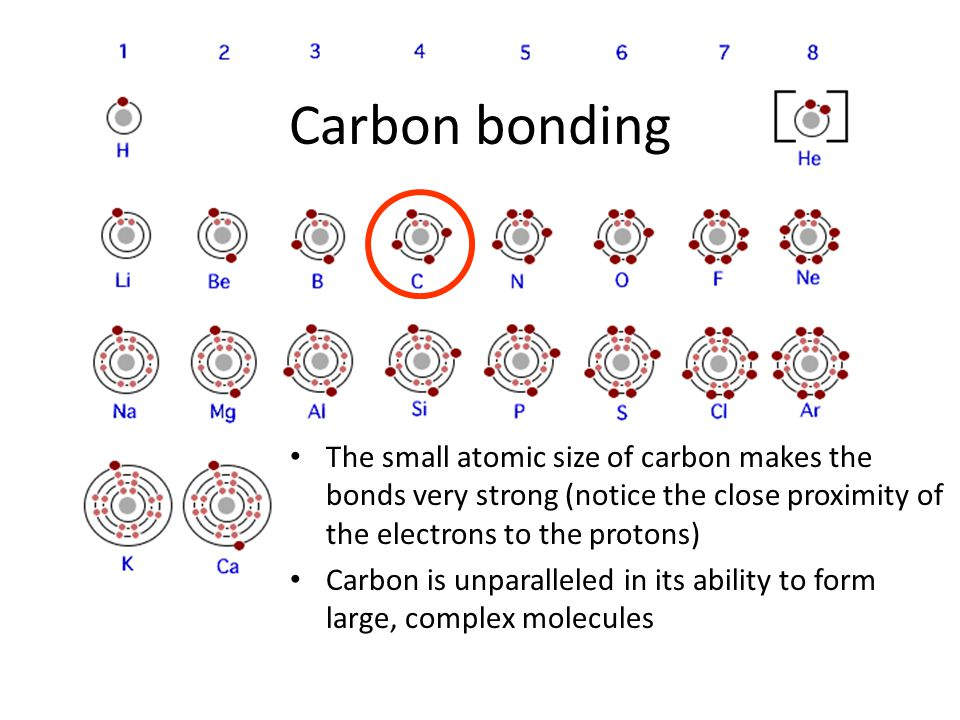 Carbon bonding The small atomic size of carbon makes the bonds very strong (notice the close proximity of the electrons to the protons) Carbon is unparalleled in its ability to form large, complex molecules