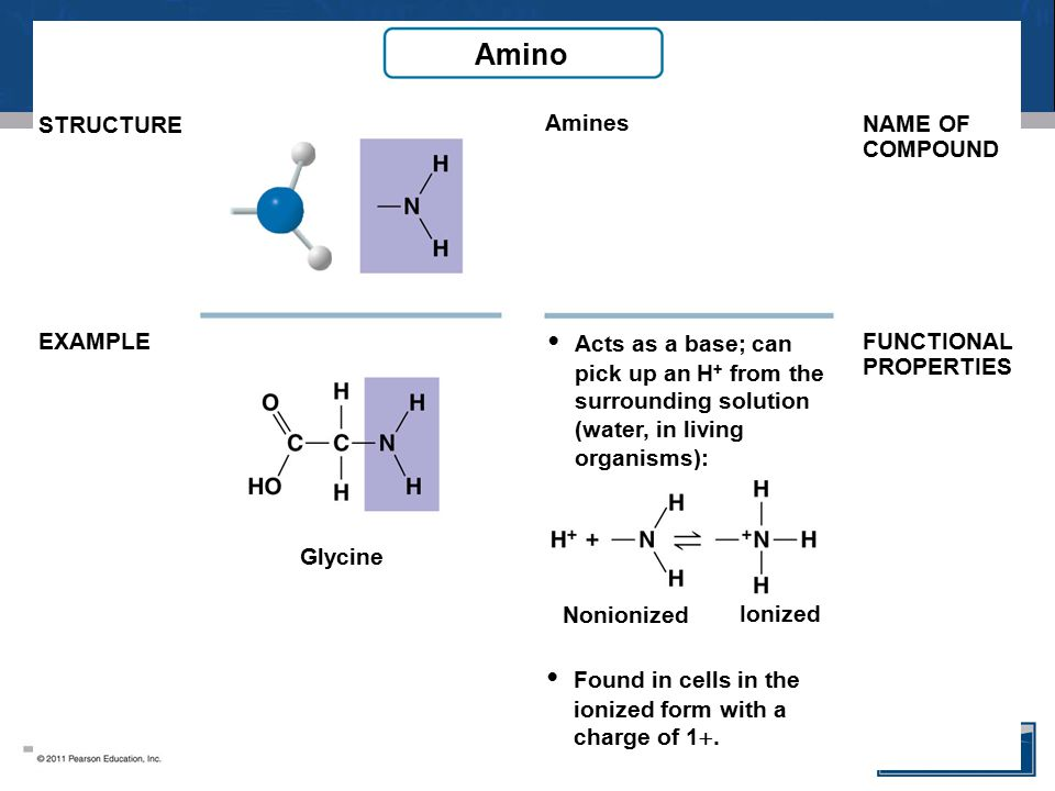 Amino Amines Glycine STRUCTURE EXAMPLE Acts as a base; can pick up an H + from the surrounding solution (water, in living organisms): NAME OF COMPOUND