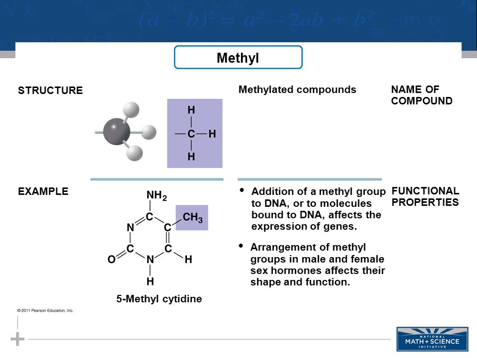 Methyl STRUCTURE EXAMPLE NAME OF COMPOUND FUNCTIONAL PROPERTIES Methylated compounds 5-Methyl cytidine Addition of a methyl group to DNA, or to molecu
