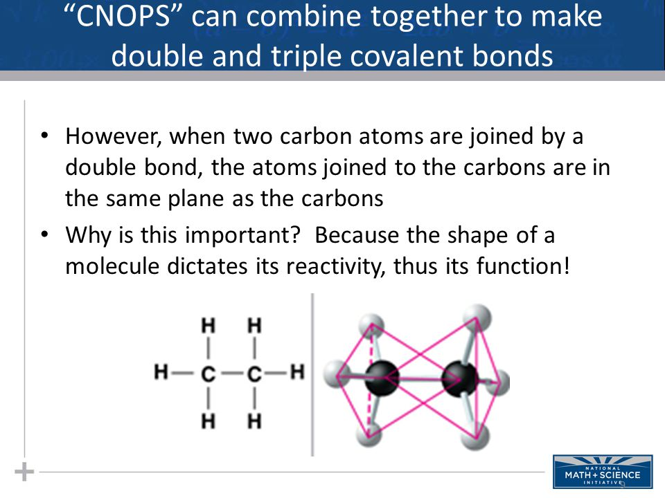 """CNOPS"" can combine together to make double and triple covalent bonds However, when two carbon atoms are joined by a double bond, the atoms joined to"