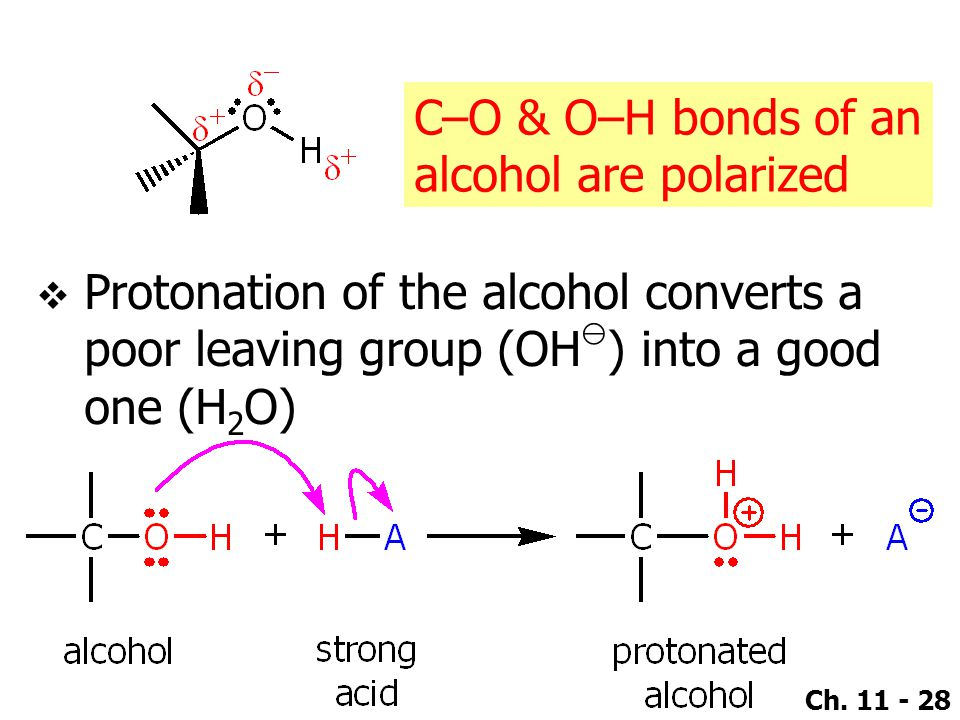 Ch. 11 - 28 C–O & O–H bonds of an alcohol are polarized  Protonation of the alcohol converts a poor leaving group (OH ⊖ ) into a good one (H 2 O)