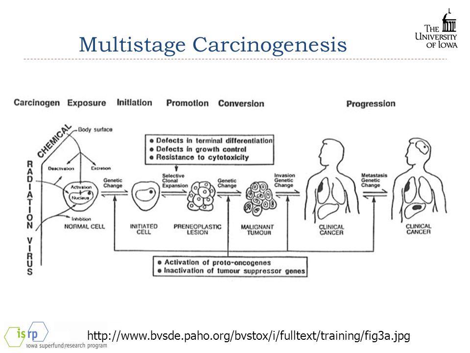 Multistage Carcinogenesis http://www.bvsde.paho.org/bvstox/i/fulltext/training/fig3a.jpg