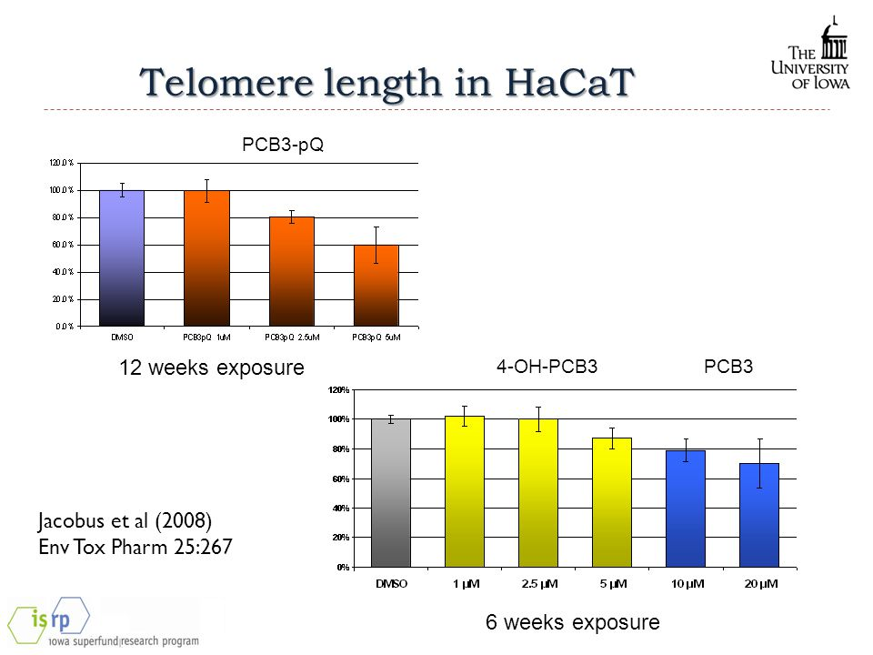 Telomere length in HaCaT 12 weeks exposure 6 weeks exposure 4-OH-PCB3 PCB3 PCB3-pQ Jacobus et al (2008) Env Tox Pharm 25:267