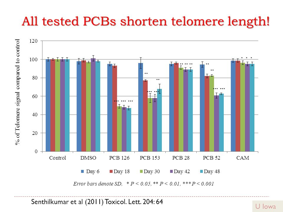 All tested PCBs shorten telomere length! ** Error bars denote SD, * P < 0.05, ** P < 0.01, *** P < 0.001 U Iowa Senthilkumar et al (2011) Toxicol. Let