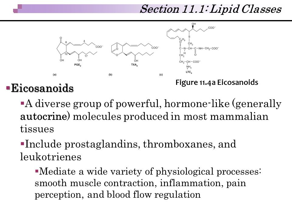  Eicosanoids  A diverse group of powerful, hormone-like (generally autocrine) molecules produced in most mammalian tissues  Include prostaglandins,