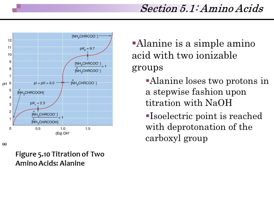  Alanine is a simple amino acid with two ionizable groups  Alanine loses two protons in a stepwise fashion upon titration with NaOH  Isoelectric po