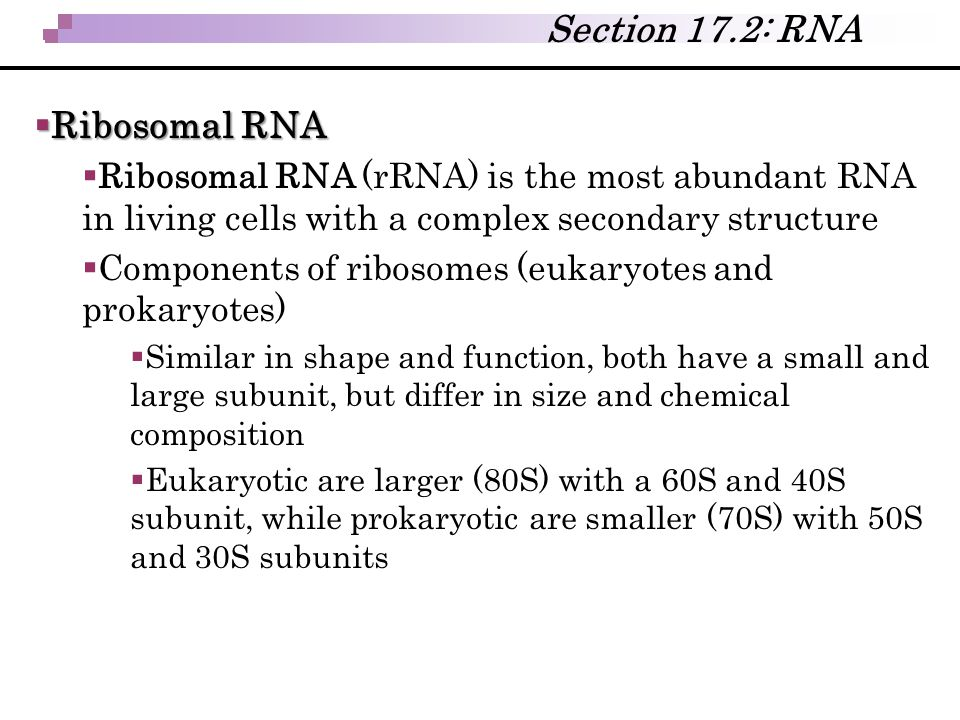  Ribosomal RNA  Ribosomal RNA (rRNA) is the most abundant RNA in living cells with a complex secondary structure  Components of ribosomes (eukaryot