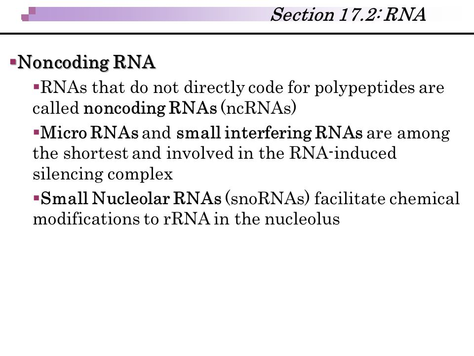  Noncoding RNA  RNAs that do not directly code for polypeptides are called noncoding RNAs (ncRNAs)  Micro RNAs and small interfering RNAs are among