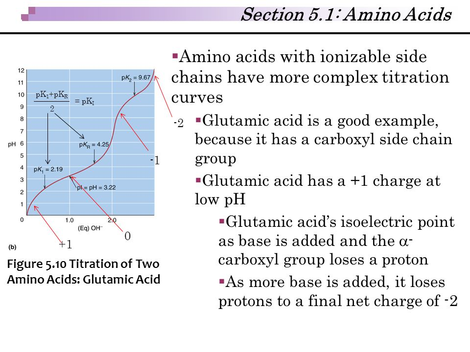 Section 5.1: Amino Acids  Amino acids with ionizable side chains have more complex titration curves  Glutamic acid is a good example, because it has