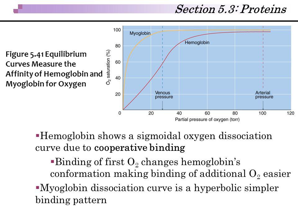  Hemoglobin shows a sigmoidal oxygen dissociation curve due to cooperative binding  Binding of first O 2 changes hemoglobin's conformation making bi