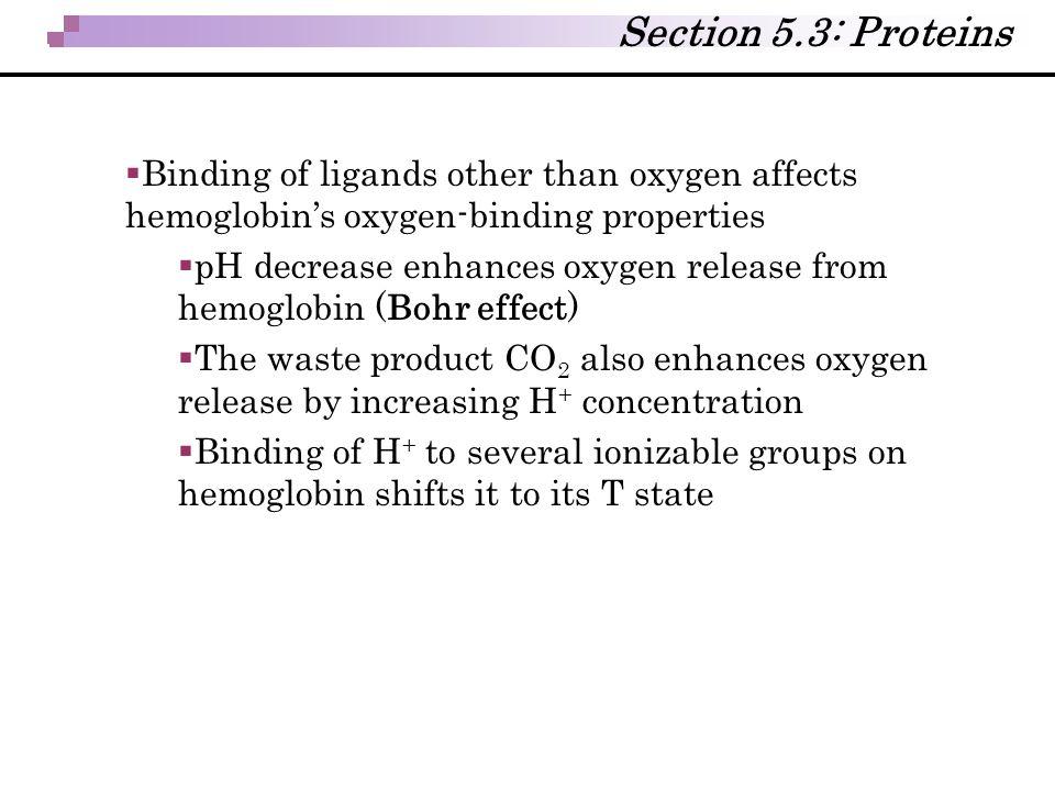  Binding of ligands other than oxygen affects hemoglobin's oxygen-binding properties  pH decrease enhances oxygen release from hemoglobin (Bohr effe