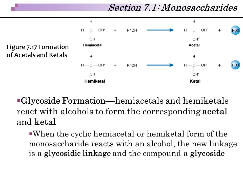Section 7.1: Monosaccharides  Glycoside Formation — hemiacetals and hemiketals react with alcohols to form the corresponding acetal and ketal  When
