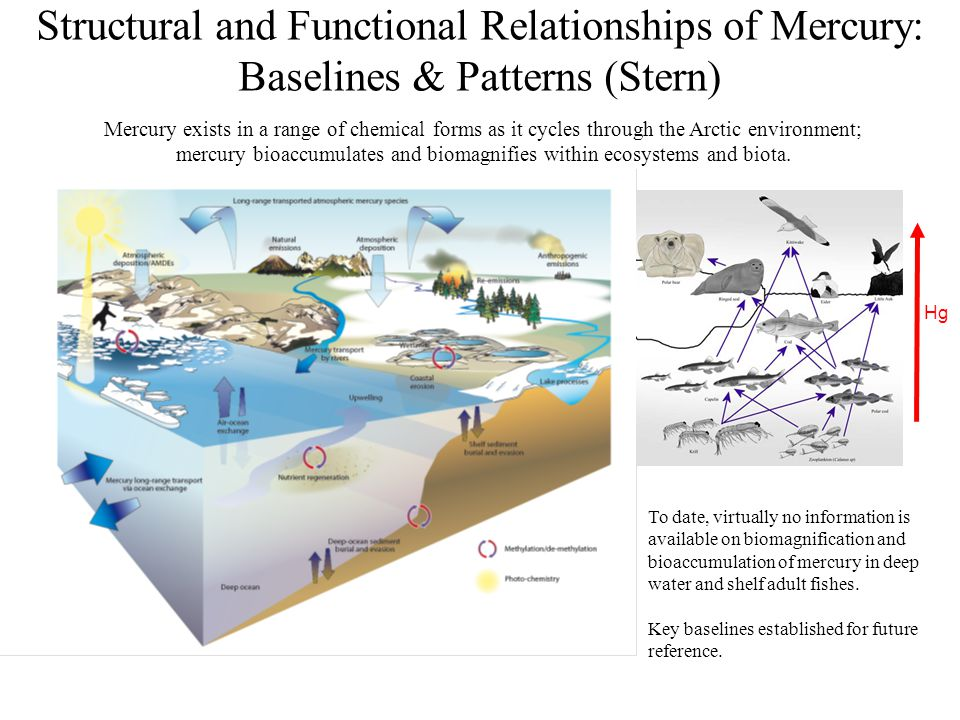 To date, virtually no information is available on biomagnification and bioaccumulation of mercury in deep water and shelf adult fishes. Key baselines