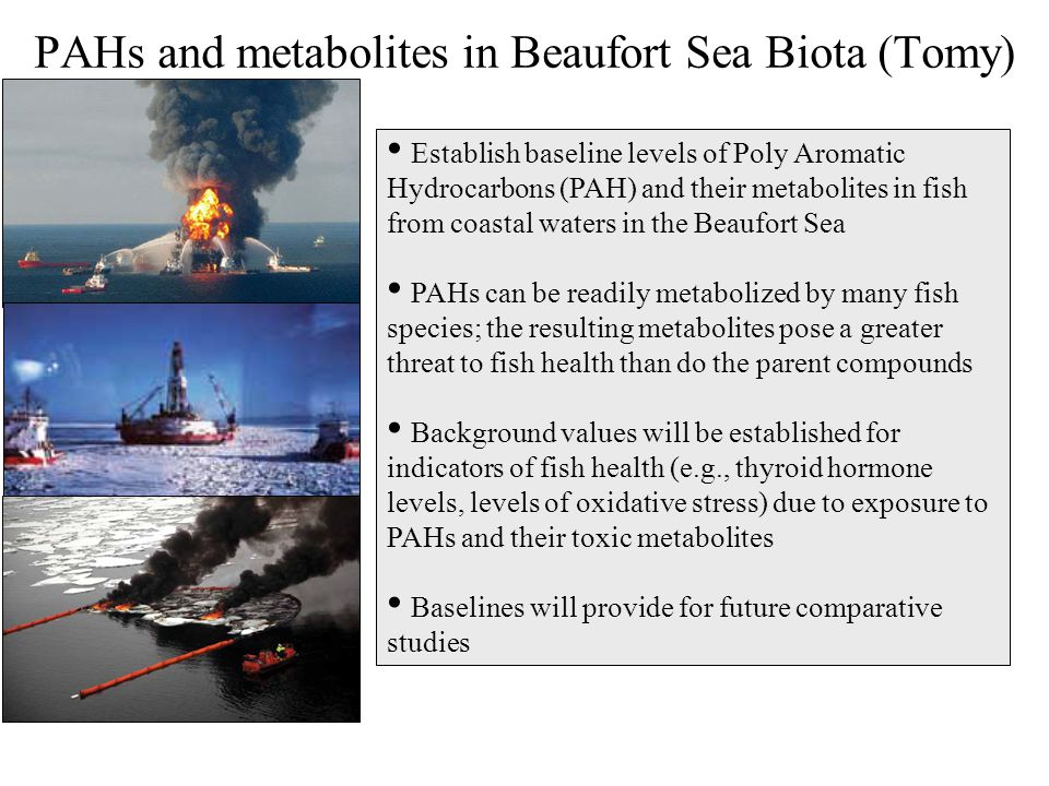 Establish baseline levels of Poly Aromatic Hydrocarbons (PAH) and their metabolites in fish from coastal waters in the Beaufort Sea PAHs can be readil