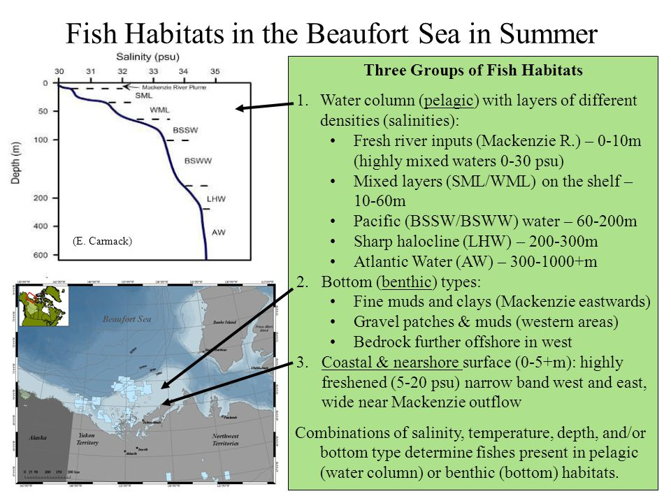 Fish Habitats in the Beaufort Sea in Summer Three Groups of Fish Habitats 1.Water column (pelagic) with layers of different densities (salinities): Fr