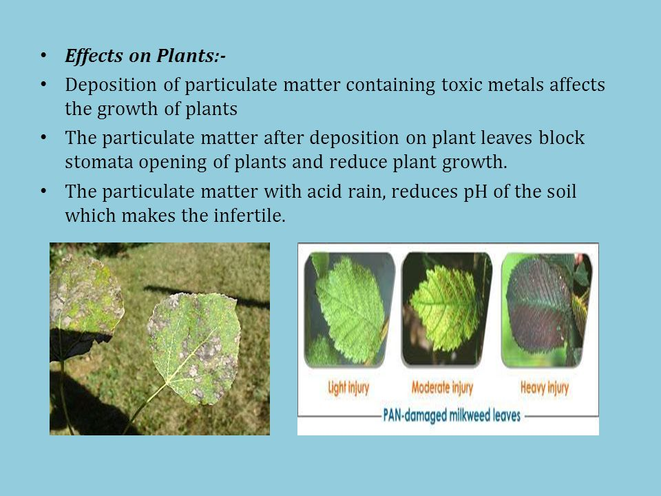 Effects on Plants:- Deposition of particulate matter containing toxic metals affects the growth of plants The particulate matter after deposition on plant leaves block stomata opening of plants and reduce plant growth.