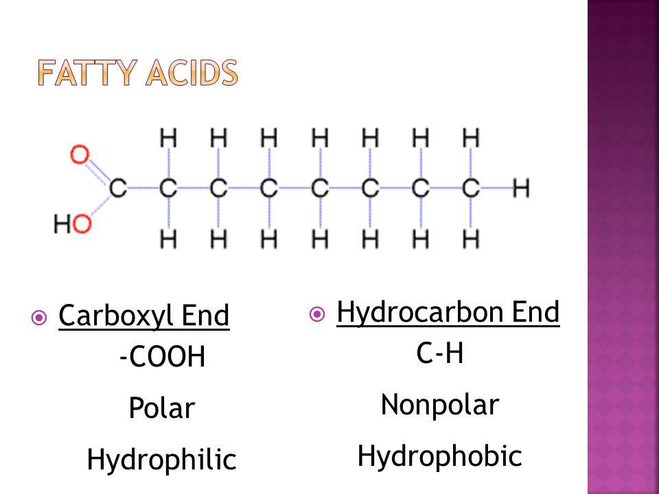  Hydrocarbon End C-H Nonpolar Hydrophobic  Carboxyl End -COOH Polar Hydrophilic