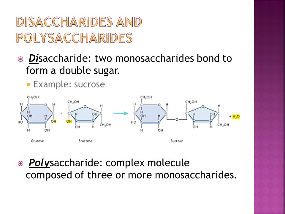  Disaccharide: two monosaccharides bond to form a double sugar.  Example: sucrose  Polysaccharide: complex molecule composed of three or more monos