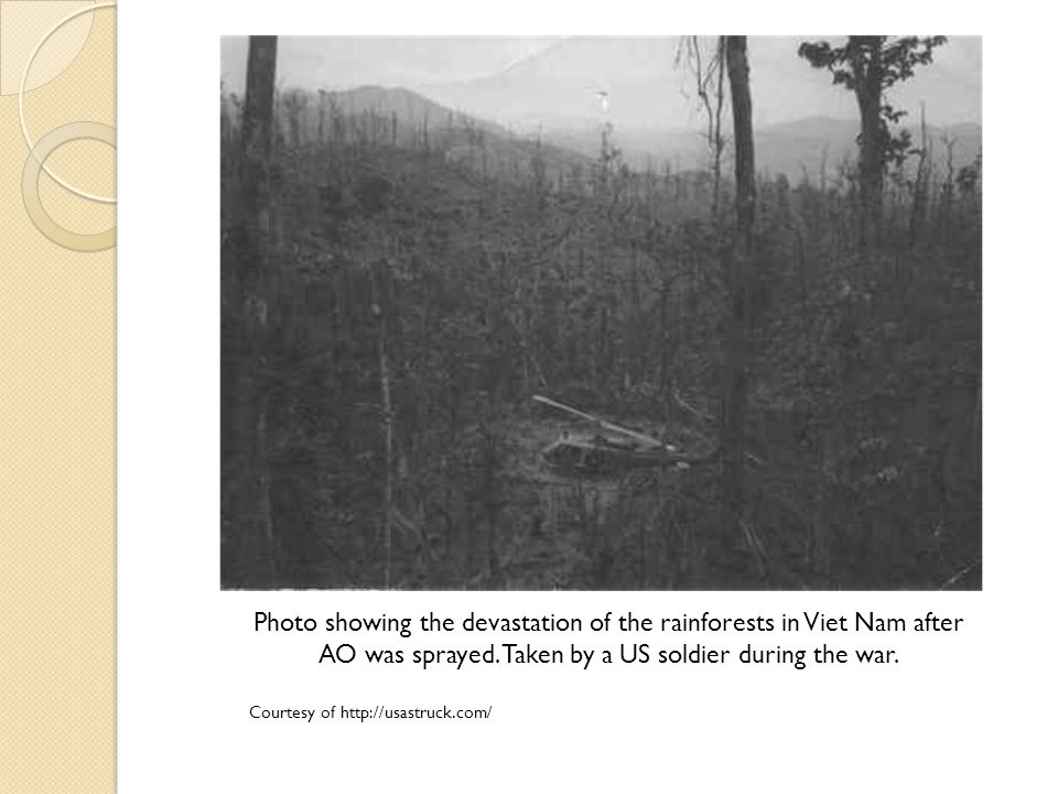 Photo showing the devastation of the rainforests in Viet Nam after AO was sprayed.