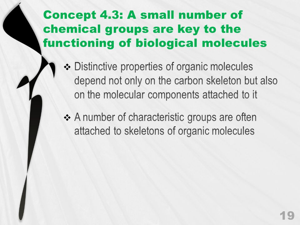 Concept 4.3: A small number of chemical groups are key to the functioning of biological molecules 19