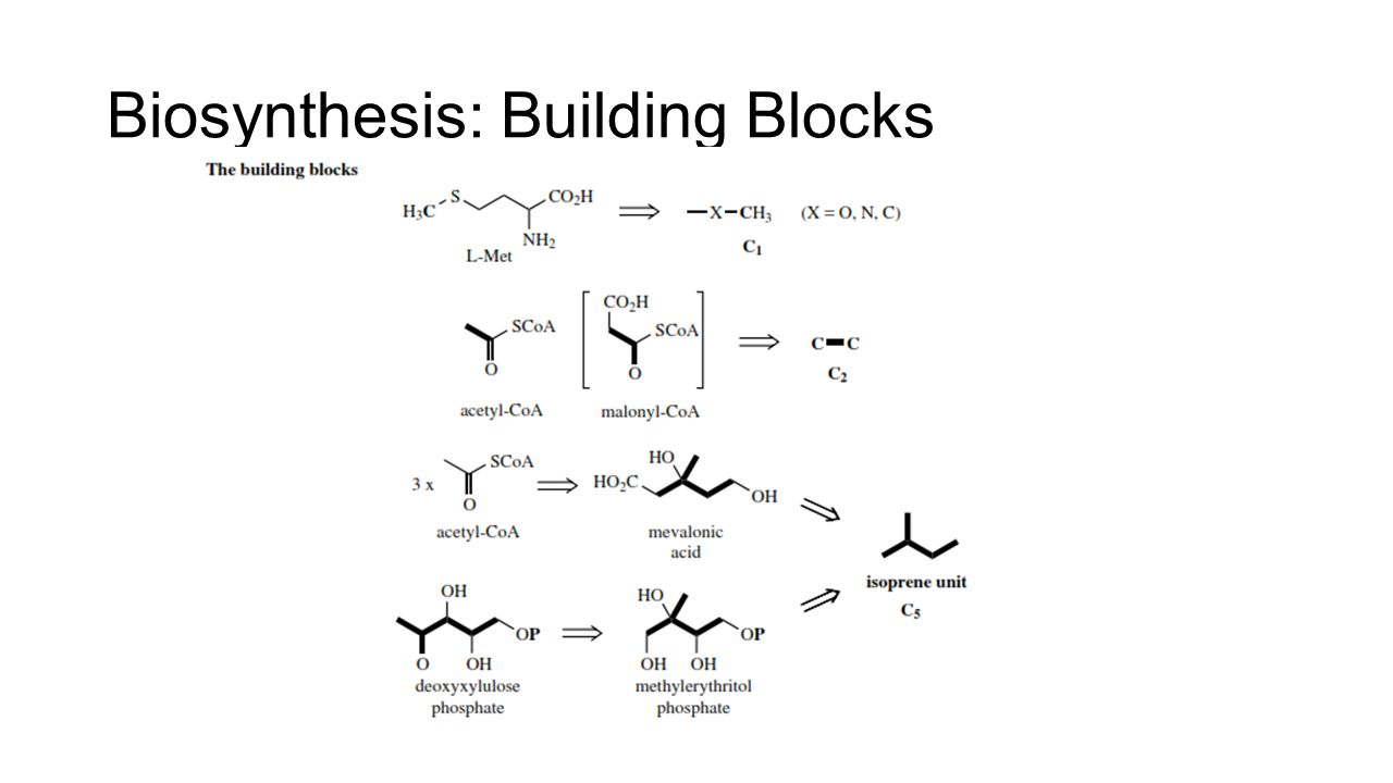 Biosynthesis: Building Blocks