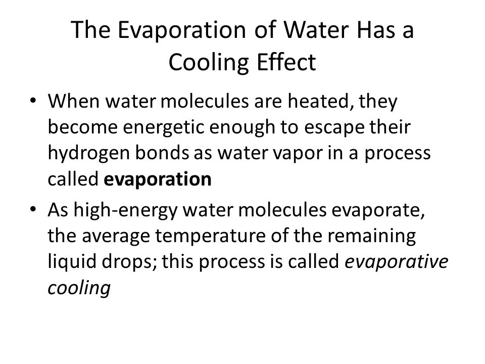 The Evaporation of Water Has a Cooling Effect When water molecules are heated, they become energetic enough to escape their hydrogen bonds as water va