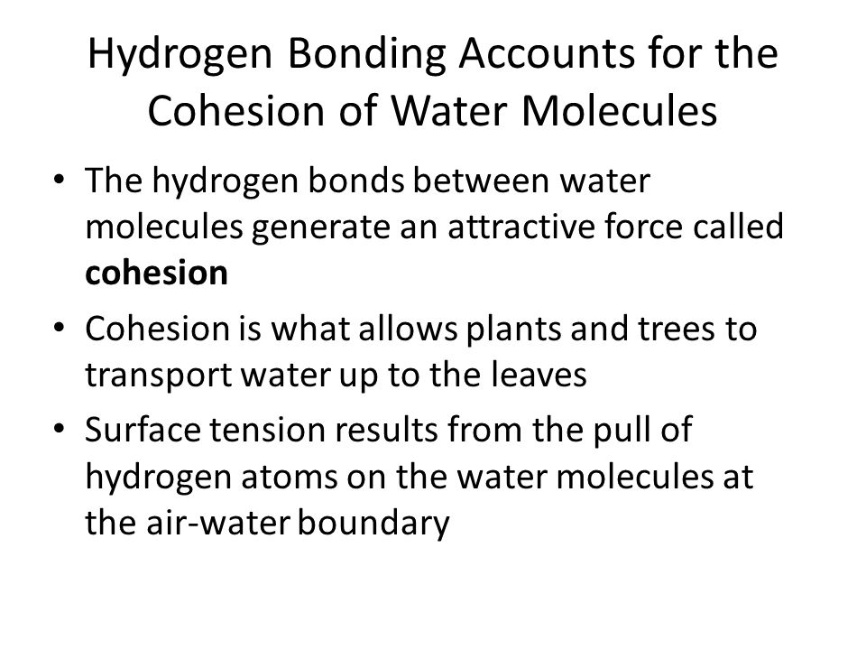 Hydrogen Bonding Accounts for the Cohesion of Water Molecules The hydrogen bonds between water molecules generate an attractive force called cohesion