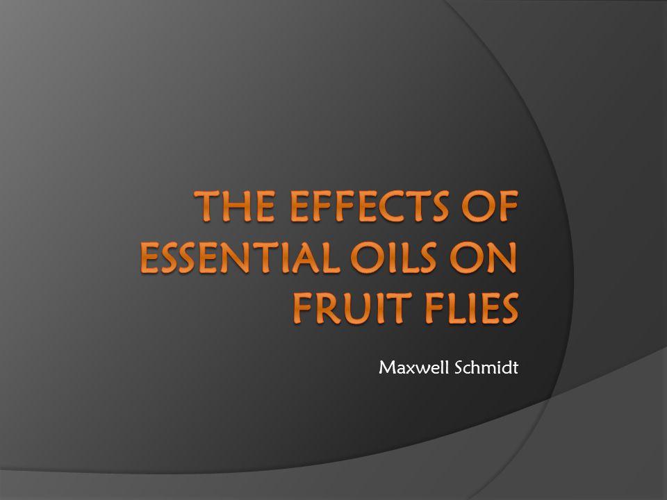 Maxwell Schmidt