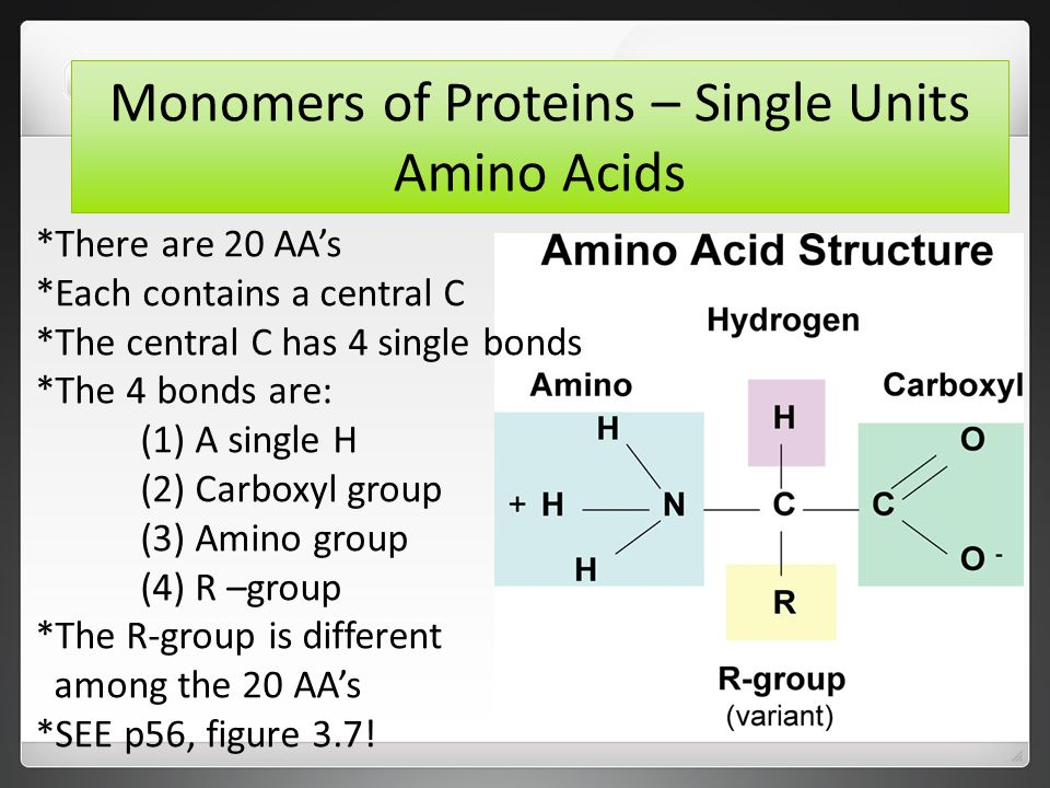 Monomers of Proteins – Single Units Amino Acids *There are 20 AA's *Each contains a central C *The central C has 4 single bonds *The 4 bonds are: (1) A single H (2) Carboxyl group (3) Amino group (4) R –group *The R-group is different among the 20 AA's *SEE p56, figure 3.7!