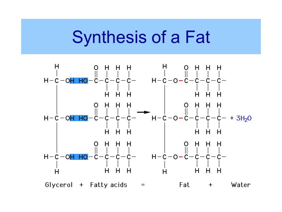 A Representative Fatty Acid Hydrocarbon Group Carboxyl Group