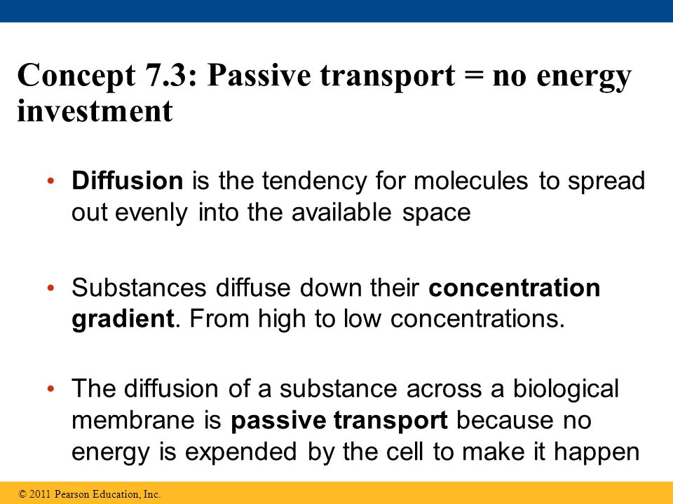 Concept 7.3: Passive transport = no energy investment Diffusion is the tendency for molecules to spread out evenly into the available space Substances