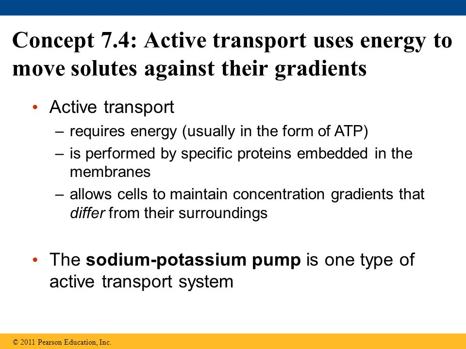 Concept 7.4: Active transport uses energy to move solutes against their gradients © 2011 Pearson Education, Inc. Active transport –requires energy (us