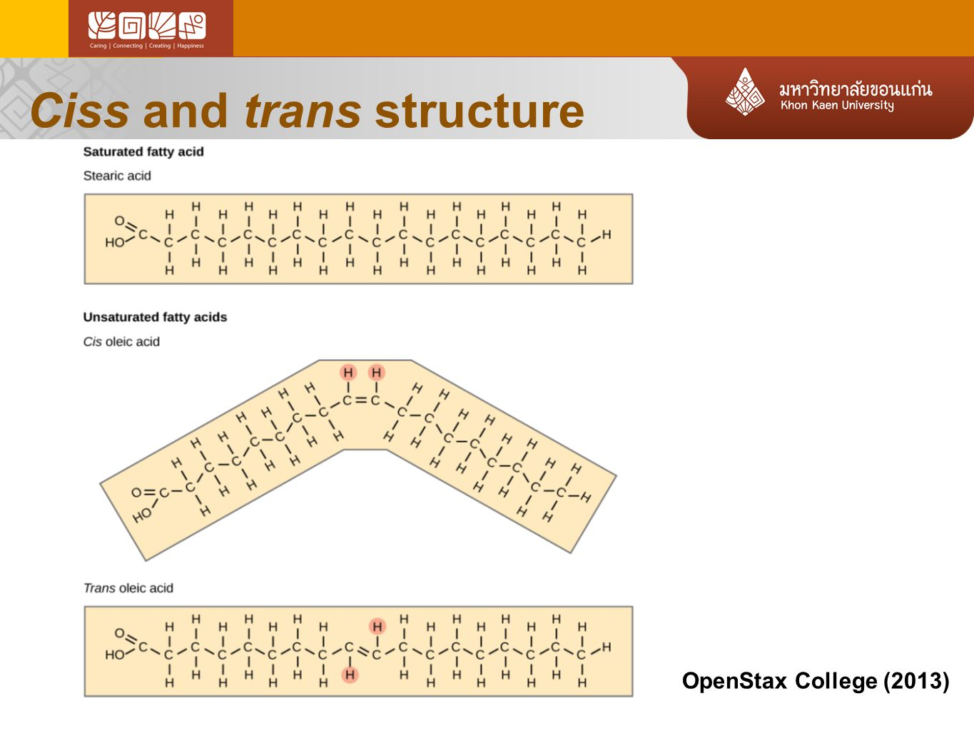 Ciss and trans structure OpenStax College (2013)