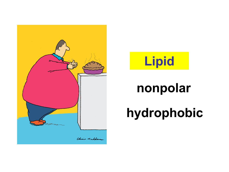 Lipid nonpolar hydrophobic