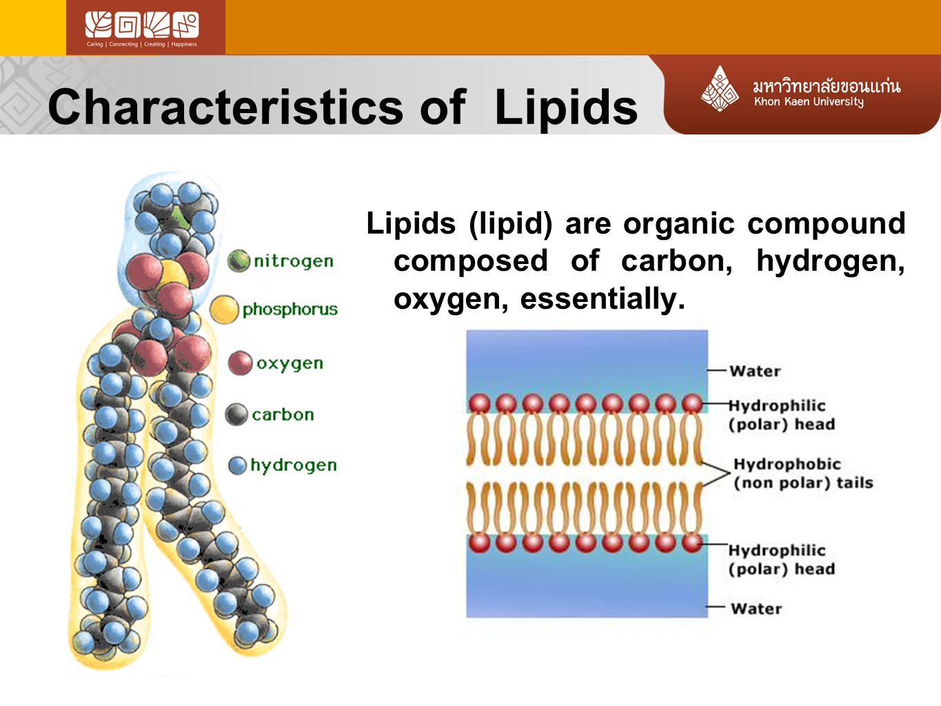 Characteristics of Lipids Lipids (lipid) are organic compound composed of carbon, hydrogen, oxygen, essentially.