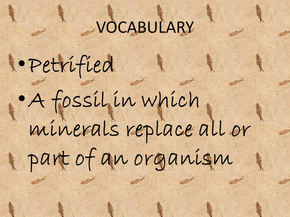 VOCABULARY Petrified A fossil in which minerals replace all or part of an organism