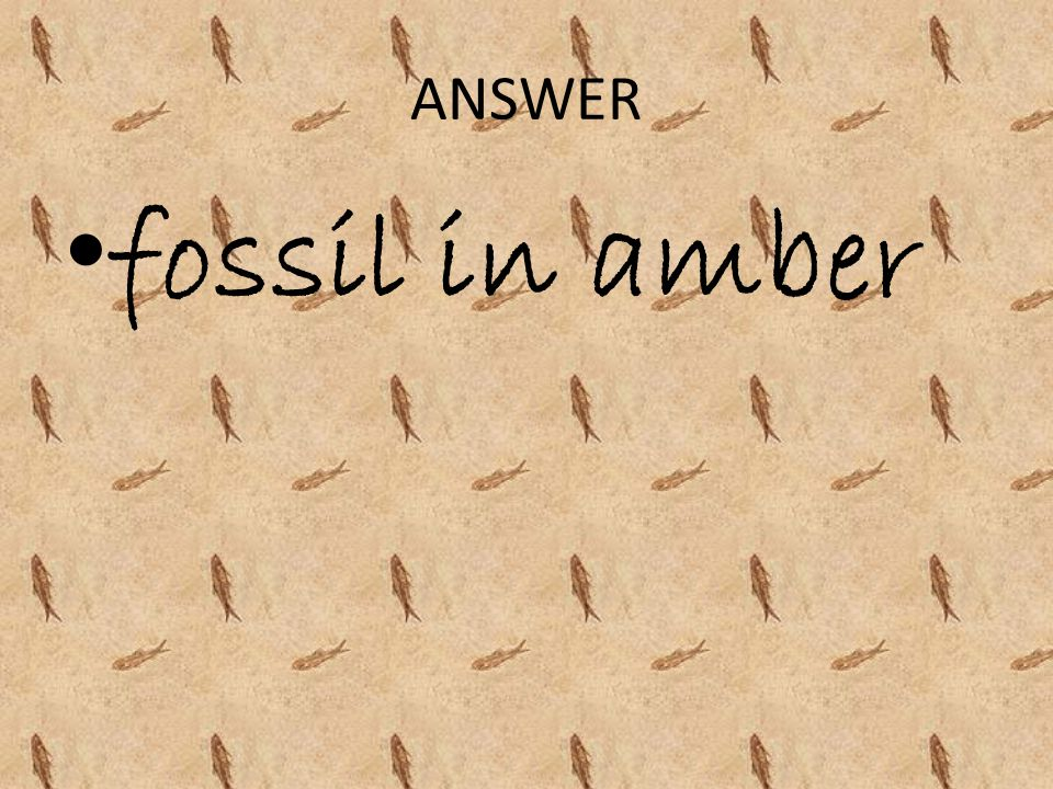 ANSWER fossil in amber