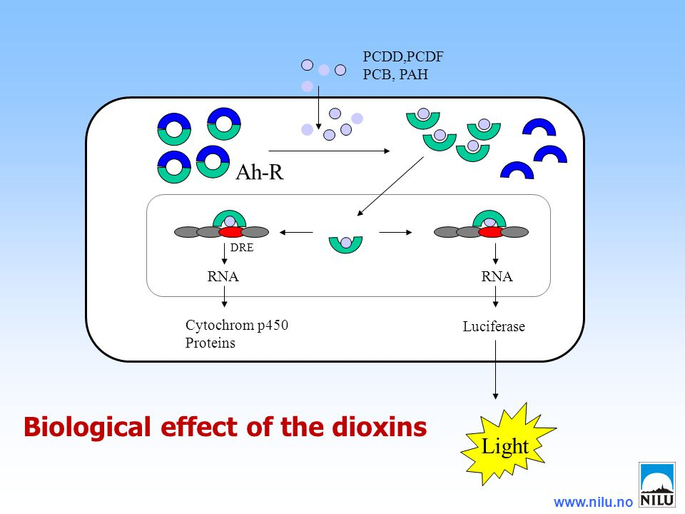 www.nilu.no RNA Cytochrom p450 Proteins Luciferase Light PCDD,PCDF PCB, PAH Ah-R DRE Biological effect of the dioxins