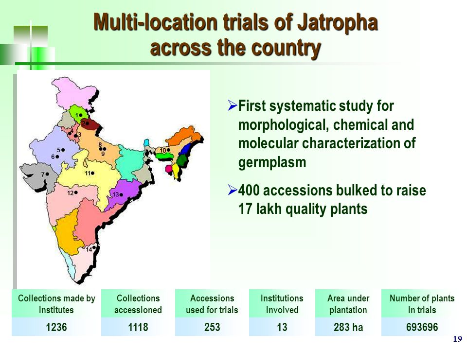 19 Multi-location trials of Jatropha across the country  First systematic study for morphological, chemical and molecular characterization of germplasm  400 accessions bulked to raise 17 lakh quality plants Collections made by institutes Collections accessioned Accessions used for trials Institutions involved Area under plantation Number of plants in trials 1236111825313283 ha693696