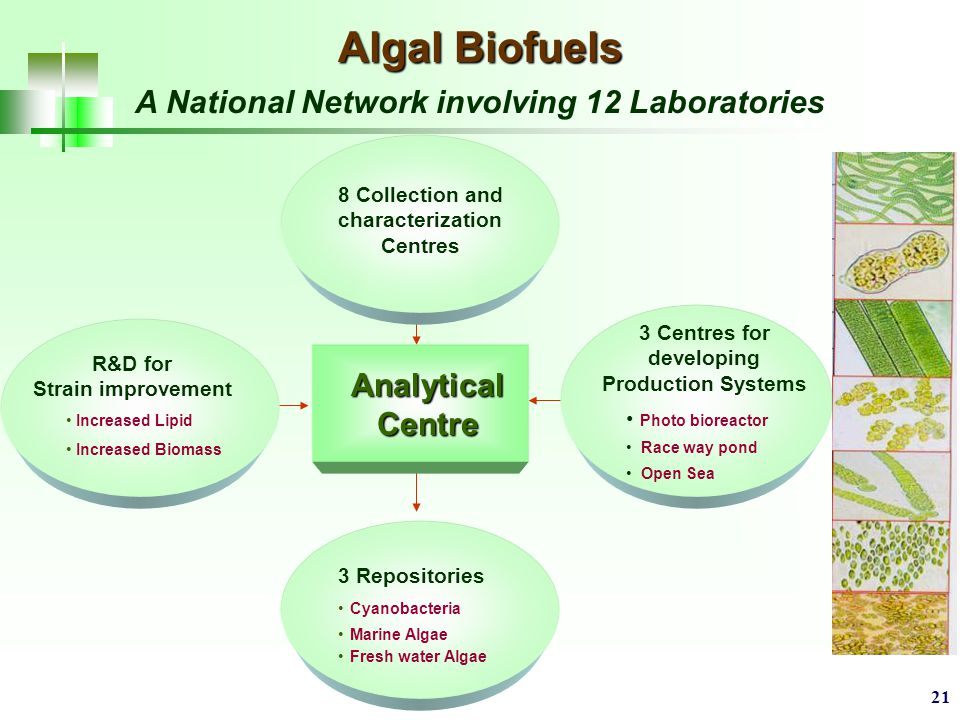 21 Algal Biofuels A National Network involving 12 Laboratories Analytical Centre R&D for Strain improvement Increased Lipid Increased Biomass 8 Collection and characterization Centres 3 Centres for developing Production Systems Photo bioreactor Race way pond Open Sea 3 Repositories Cyanobacteria Marine Algae Fresh water Algae