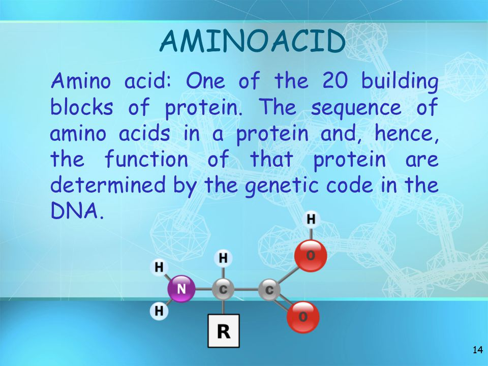 AMINOACID Amino acid: One of the 20 building blocks of protein.
