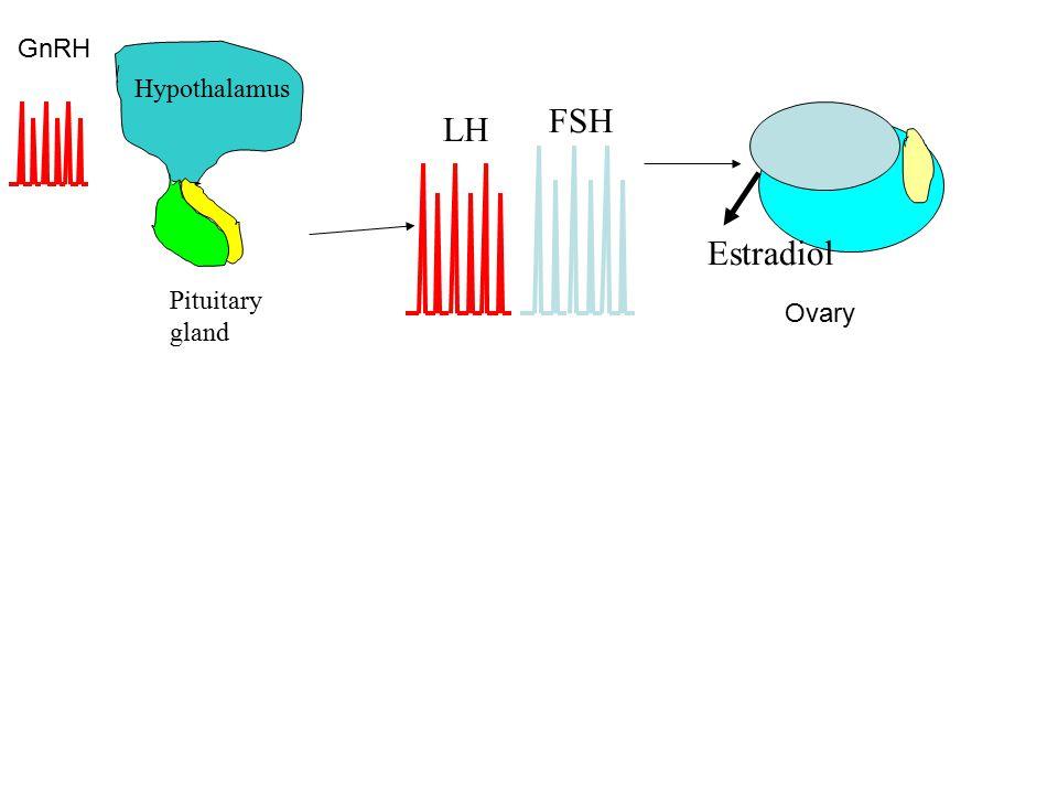 LH FSH Estradiol Hypothalamus Pituitary gland GnRH Ovary