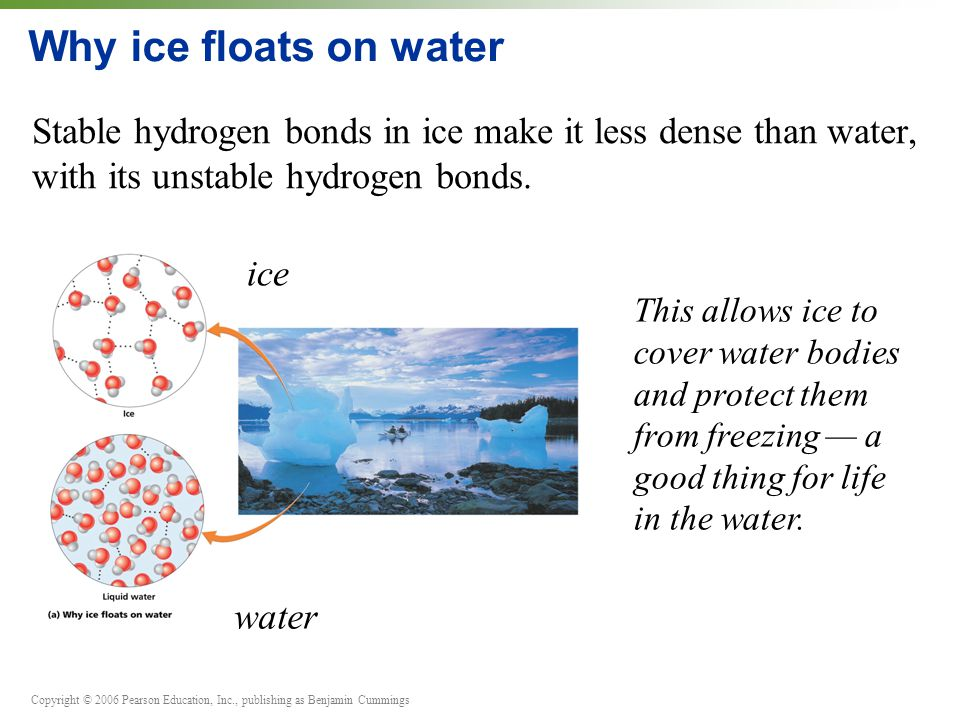 Copyright © 2006 Pearson Education, Inc., publishing as Benjamin Cummings Why ice floats on water Stable hydrogen bonds in ice make it less dense than water, with its unstable hydrogen bonds.