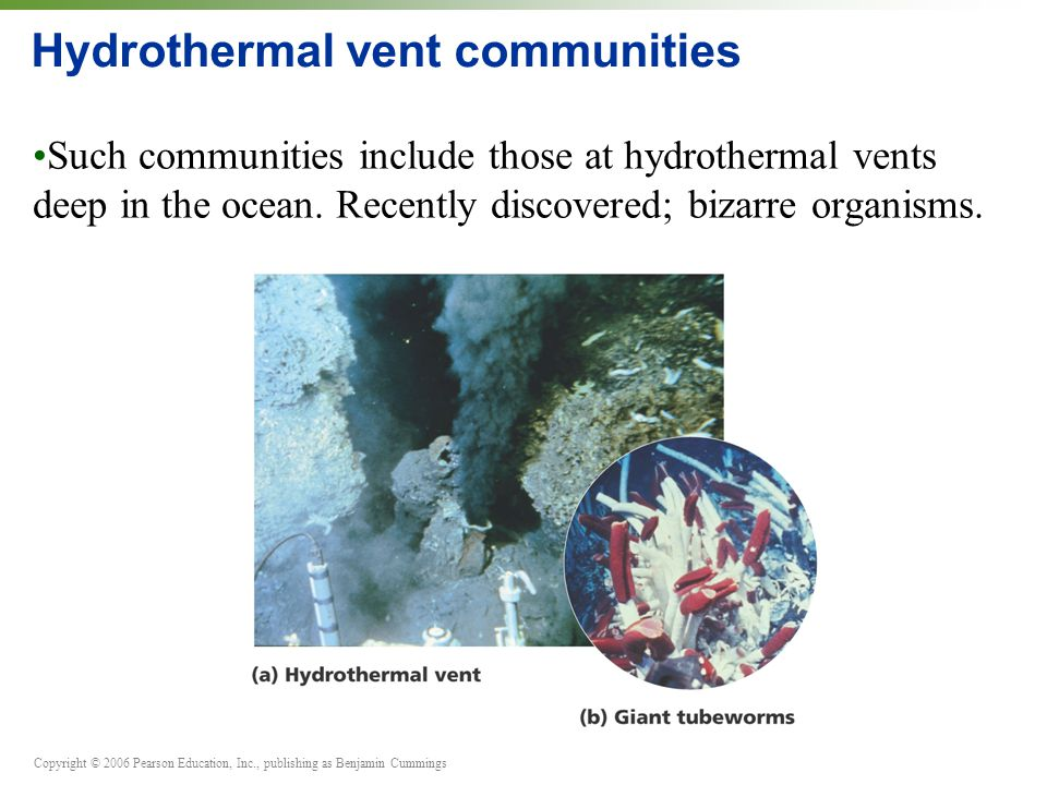 Copyright © 2006 Pearson Education, Inc., publishing as Benjamin Cummings Hydrothermal vent communities Such communities include those at hydrothermal vents deep in the ocean.
