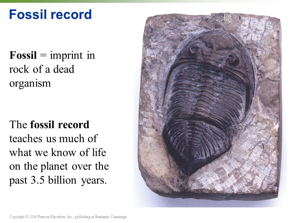 Copyright © 2006 Pearson Education, Inc., publishing as Benjamin Cummings Fossil record Fossil = imprint in rock of a dead organism The fossil record teaches us much of what we know of life on the planet over the past 3.5 billion years.