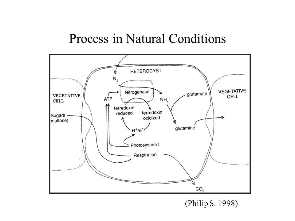 Process in Natural Conditions (Philip S. 1998)