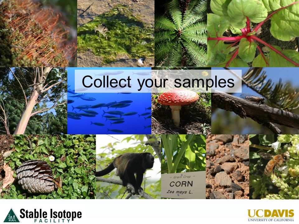 Collect your samples