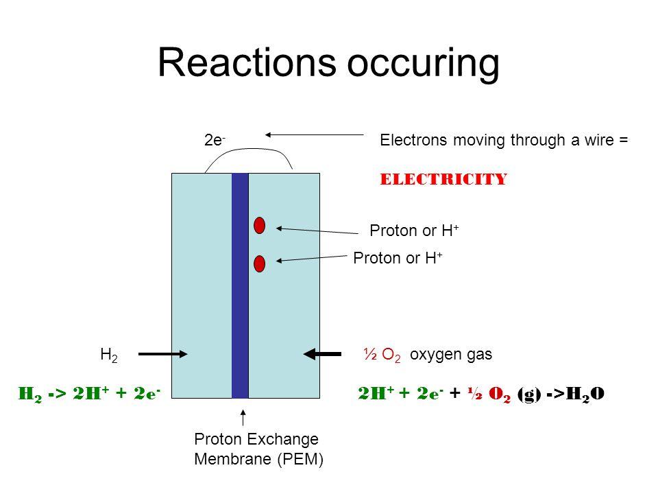 Reactions occuring Proton Exchange Membrane (PEM) ½ O 2 oxygen gasH2H2 2e - Electrons moving through a wire = ELECTRICITY Proton or H + H 2 -> 2H + + 2e - 2H + + 2e - + ½ O 2 (g) ->H 2 O